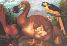 One of the most famous representation of Dodo