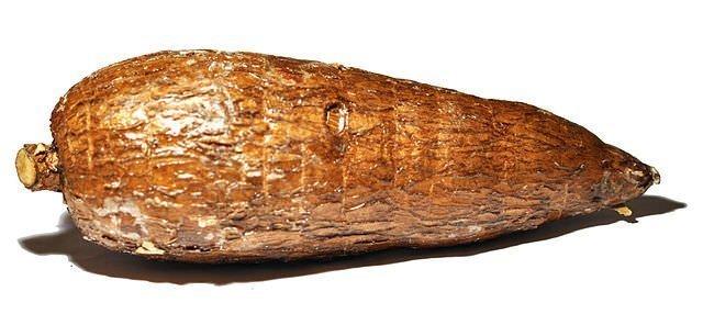 Manihot Cassava