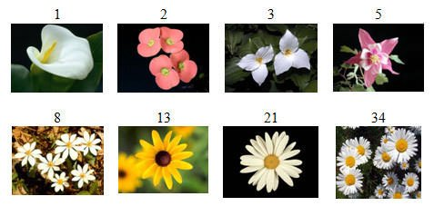 Fibonacci Numbers in flowers