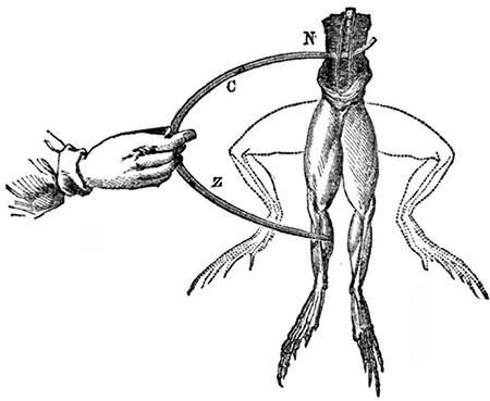 Diagram of Galvani's frog legs electricity experiment