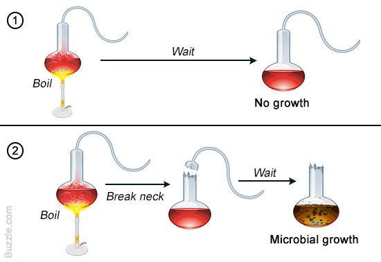 Pasteur Swan-neck Flasks experiment diagram