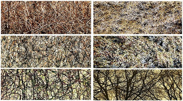 Jackson Pollock Fractal Analysis