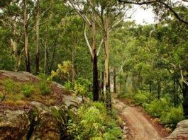 Famous Australian Poems Featured